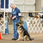 Obedience heeling pattern
